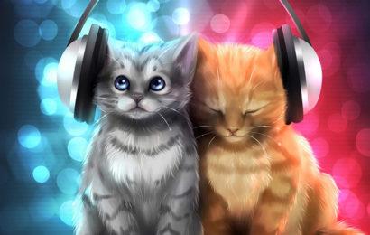 Tuyển tập những hình nền cặp đôi mèo tình cảm và tinh nghịch cho máy tính
