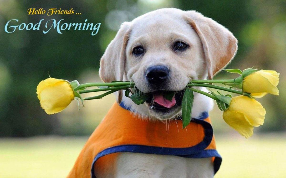 hinh-anh-hoa-hong-chao-ngay-moi-good-morning-15