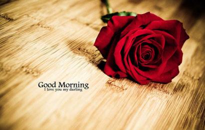 Những hình ảnh hoa hồng chào ngày mới – Good Morning lung linh