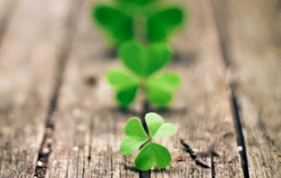 Bộ tuyển tập ảnh bìa facebook về cỏ may mắn ba lá và bốn lá cực đẹp