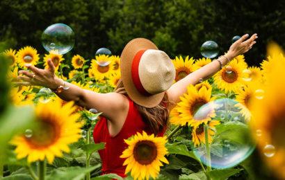 Những hình ảnh hoa hướng dương – hoa mặt trời lãng mạn cho máy tính