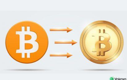 Dịch vụ Hard Fork tiền ảo (Coin) tại Việt Nam nhanh chóng và uy tín