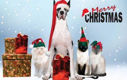 Hình ảnh chú mèo dễ thương đón Noel cho máy tính đẹp và ngộ nghĩnh