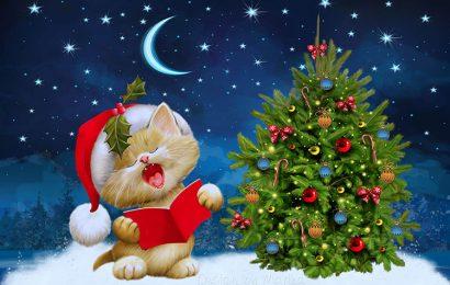 Hình nền chú mèo đón giáng sinh (Merry Christmas) cho máy tính đẹp