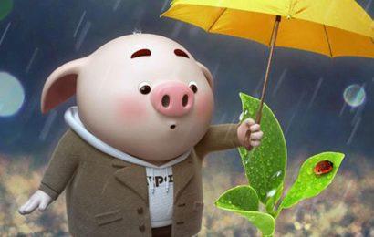 Những hình nền chú lợn con ủn ỉn độc đáo và dễ thương cho smartphone Android