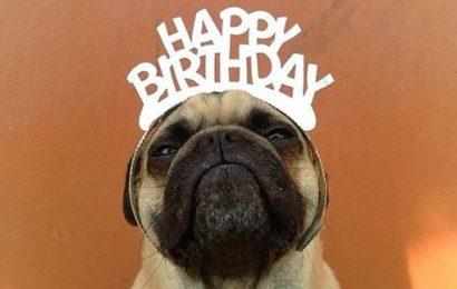 30 status chúc mừng sinh nhật bạn thân cười không nhặt được mồm