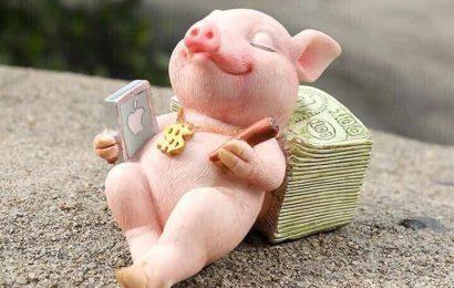 Những hình ảnh chú lợn hồng ủn ỉn tận hưởng cuộc sống hài hước