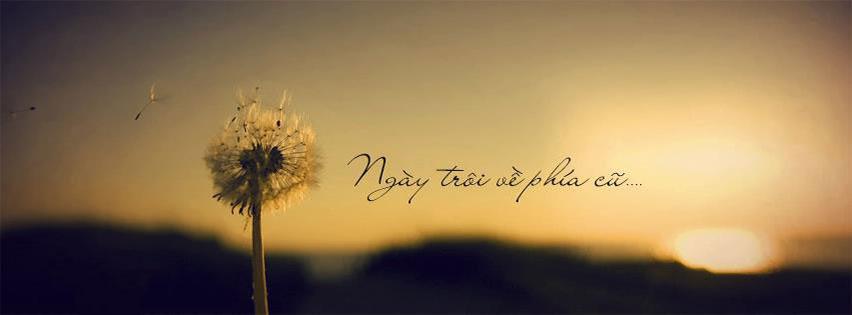top cover và ảnh bìa hoa bồ công anh bay trong gió kèm số 9