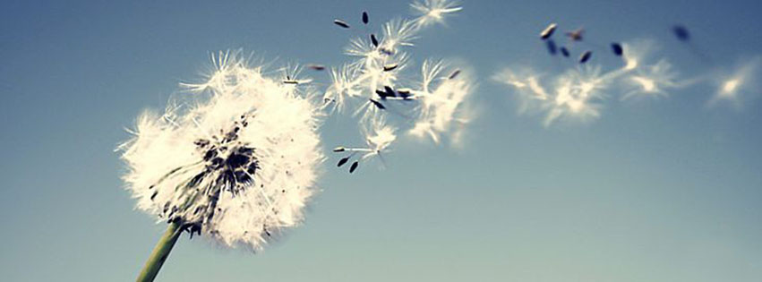 top cover và ảnh bìa hoa bồ công anh bay trong gió kèm số 6