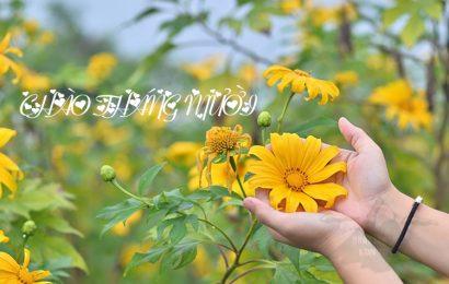 Tuyển tập 30 bài thơ chào tháng mười yêu thương và nỗi nhớ