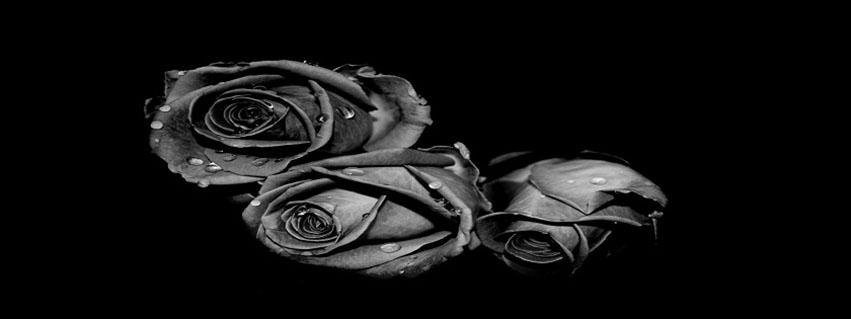 cover facebook về hoa hồng đen đầy bí ẩn số 15