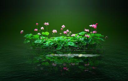 Tuyển tập những hình ảnh và hình nền hoa sen đẹp mê lòng người full hd