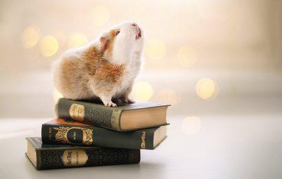 Tuyển tập hình nền động vật con chuột Hamster cho máy tính và laptop