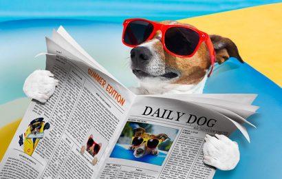 Top 50 hình ảnh và nền con chó ngầu đáng yêu đẹp chất lượng full hd