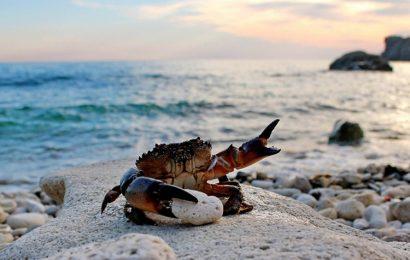 Tuyển tập hình nền phong cảnh thiên nhiên về bờ biển mộng mơ lên thơ