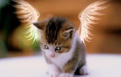 Tuyển tập hình nền mèo con đáng yêu cho Samsung Galaxy S21