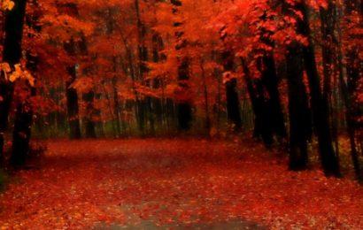 Share hình nền con đường mùa thu rực rỡ cho điện thoại Iphone