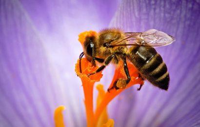 Top 50 hình nền ong và hoa cực sống động cho máy tính