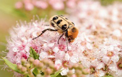 Top 30 hình nền con bọ cánh cứng sống động cực đẹp cho máy tính