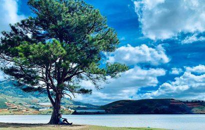 Tuyển chọn hình nền cây cô đơn cho điện thoại Samsung Galaxy S21
