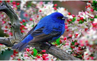Tuyển tập hình nền chim xanh đẹp nhất cho điện thoại OPPO A15S