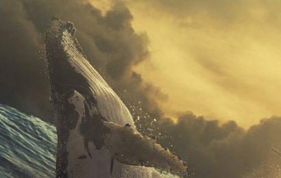 Share tuyển tập hình nền cá voi  đáng yêu cho điện thoại miễn phí