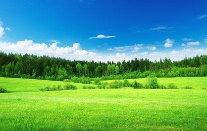 Hình nền đồng cỏ xanh mướt cho điện thoại Samsung Galaxy A02s