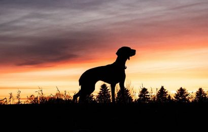 Share hình nền con chó đáng yêu và hài hước cho điện thoại