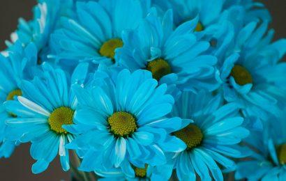 Tuyển tập 50+ hình nền hoa cúc đẹp nhất cho máy tính