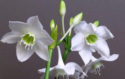 Tuyển tập hình nền hoa ngọc trâm cực đẹp cho máy tính