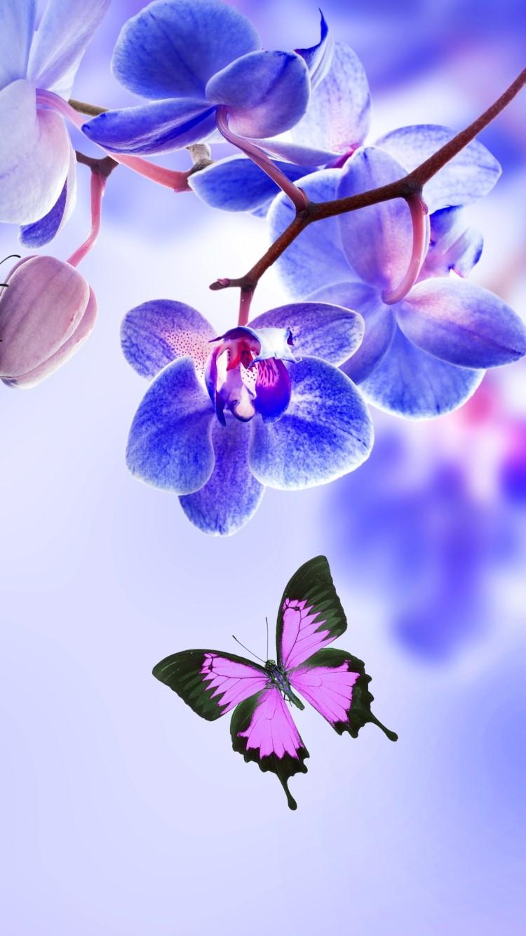 hình nền hoa phong lan cực đẹp cho iphone 28