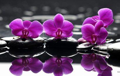 Hình nền hoa phong lan thuần khiết cho điện thoại Sony Xperia 1 Mark III