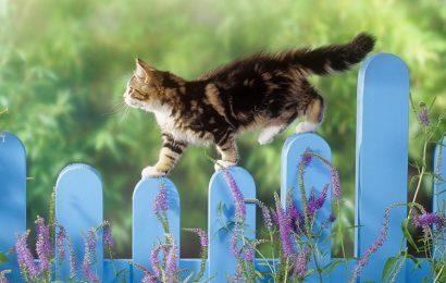Chia sẻ top 30 hình nền mèo con tinh nghịch cho máy tính, laptop