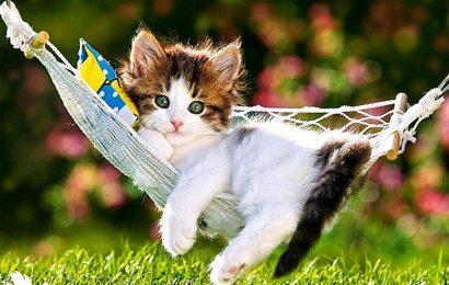 Hình nền mèo con ngơ ngác cho điện thoại Samsung Galaxy A02