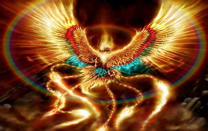 Top 30 hình nền động vật chim phượng Hoàng – Phoenix cho máy tính