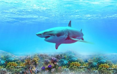 Tuyển tập 50 hình nền động vật cá Mập ngoài biển khơi hung dữ