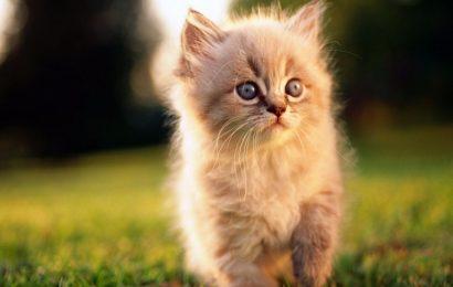 Share hình nền mèo con đáng yêu cho điện thoại  Xiaomi Poco M3 Pro