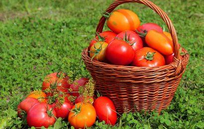 Top 30 hình nền quả cà chua chín đỏ căng mọng cực đẹp cho máy tính